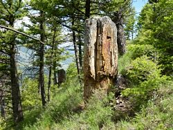 Specimen Ridge Day Hike Trailhead