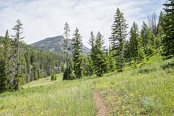 Grinnell Creek Trailhead