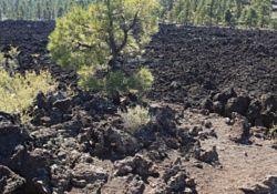 Lava Flow Interpretive Trail
