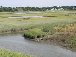 Belle Isle Inlet Marshes