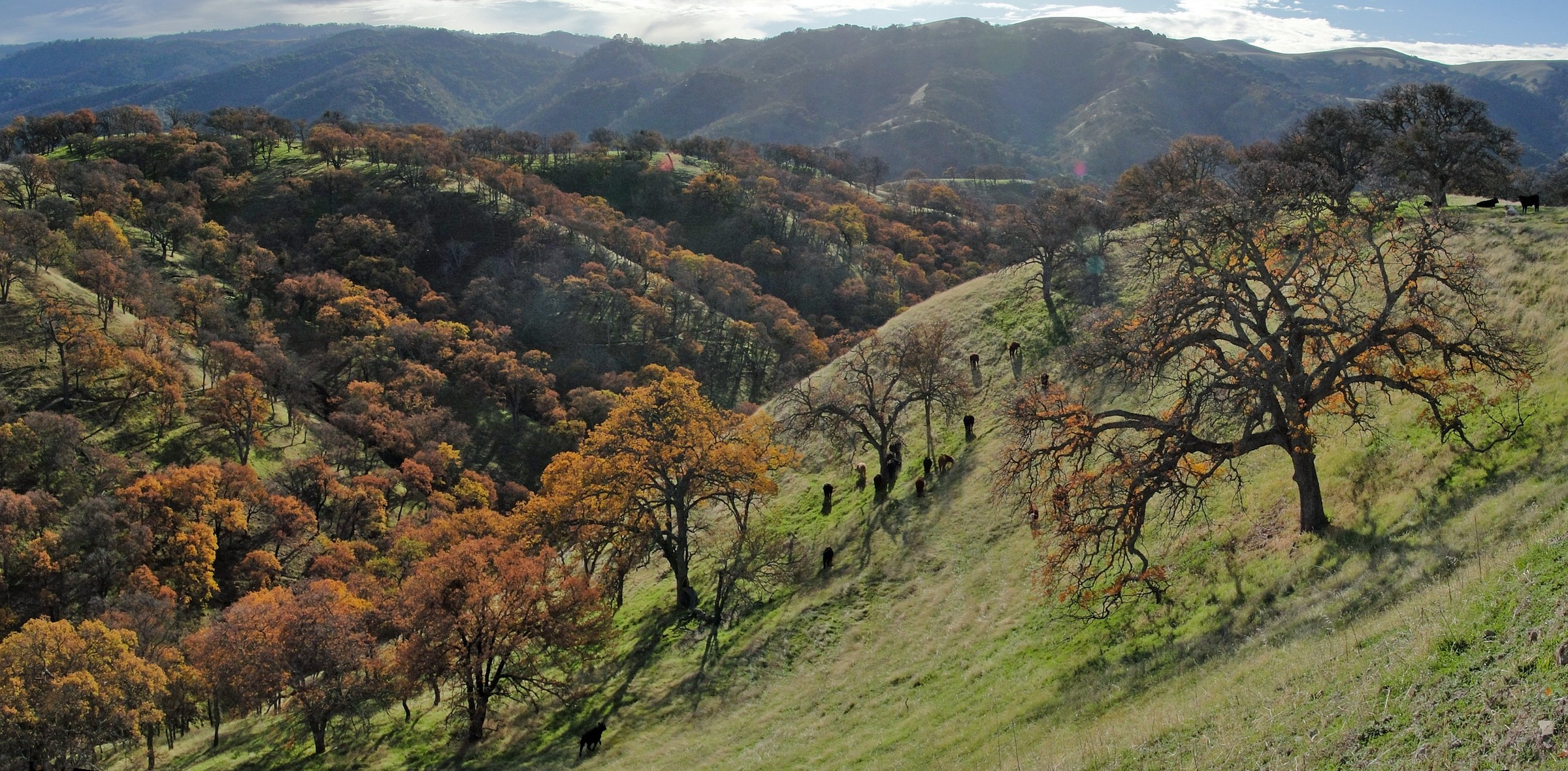 Lake Del Valle State Recreation Area Map, CA – Natural Atlas