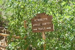 Spruce Canyon Trail