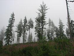 Rattlesnake Mountain Trail