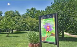 Kenilworth Aquatic Gardens Trailhead