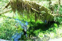 Hoh Visitor Center Mini-Loop Nature Trail