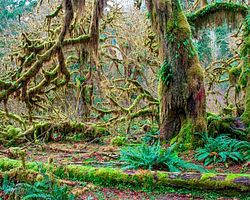 Hall of Mosses Nature Trail