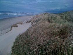 South Jetty Beach Access #5