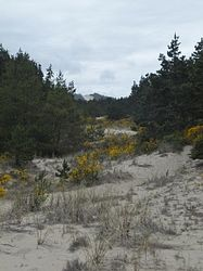 Tahkenitch Creek Trail