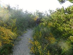 Tahkenitch Dunes Trail