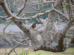 Manukā Bird Watching Area