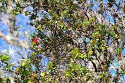 Kīpukapuaulu Bird Watching Area