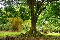 Ke'anae Arboretum Trailhead