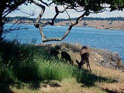 Posey Island Cascadia Marine Trail Campsite