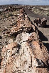 Crystal Forest Interpretive Trail