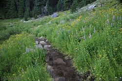 Castle Crest Wildflower Trail