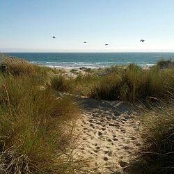 Oceano Dunes Trailhead
