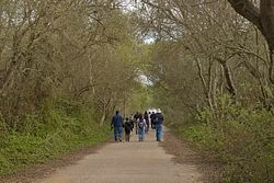 Oso Flaco Lake Trail