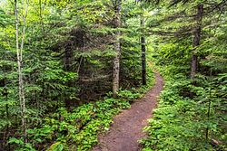 Honeymoon Bluff Trail