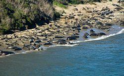 Elephant Seal Overlook
