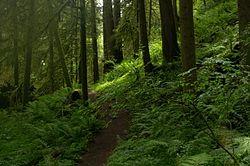 Hunchback Trail
