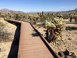 Cholla Cactus Garden Trail