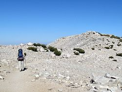 San Gorgonio Mountain Trail