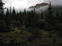 McCurdy Park Trail