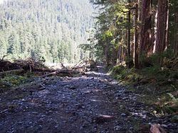 Carbon River Road Trail