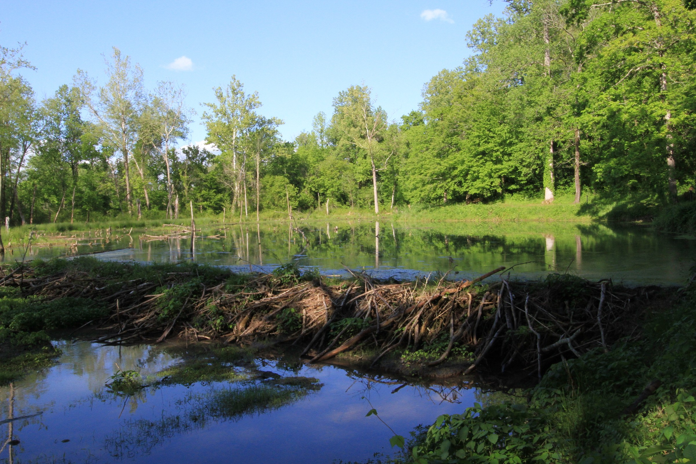 Beaver Dam Ford >> Natchez Trace Parkway Map – Natural Atlas