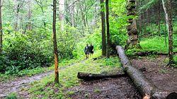 Gregory Ridge Trail