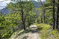 Petes Hole Trail