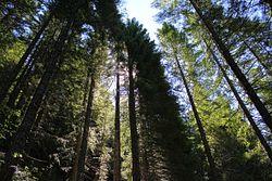 Shriner Peak Trail