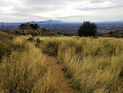 Tanque Verde Ridge Trail