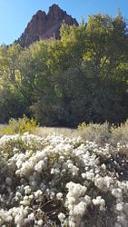 Spring Creek Canyon Trail