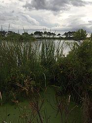 Gator Lake Observation Point