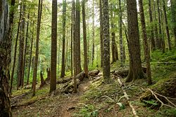 Trapper Creek Trail