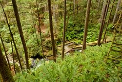 Horseshoe Creek Falls Campsite
