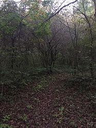 Limberlost Bird Sanctuary